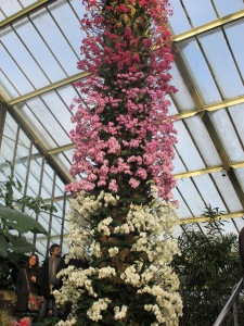 A tree of orchids