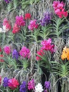 Kew Gardens 079