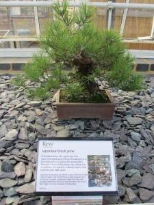 Kew Gardens 083